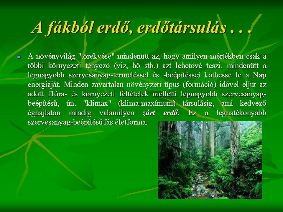 A fákból erdő, erdőtársulás . . .