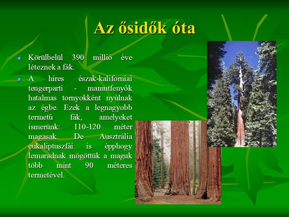 Az ősidők óta Körülbelül 390 millió éve léteznek a fák.