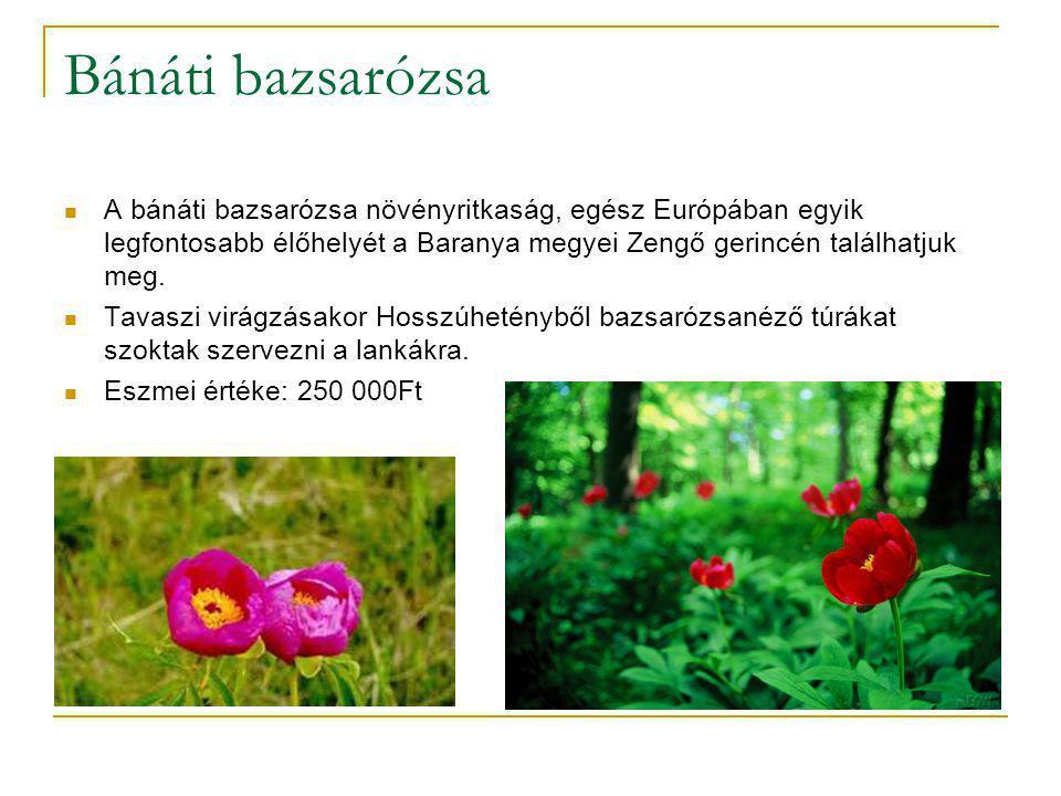 Bánáti bazsarózsa A bánáti bazsarózsa növényritkaság, egész Európában egyik legfontosabb élőhelyét a Baranya megyei Zengő gerincén találhatjuk meg.