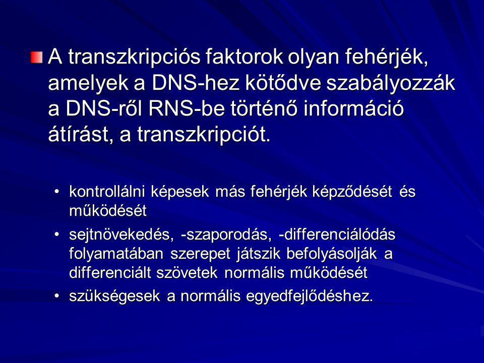 A transzkripciós faktorok olyan fehérjék, amelyek a DNS-hez kötődve szabályozzák a DNS-ről RNS-be történő információ átírást, a transzkripciót.