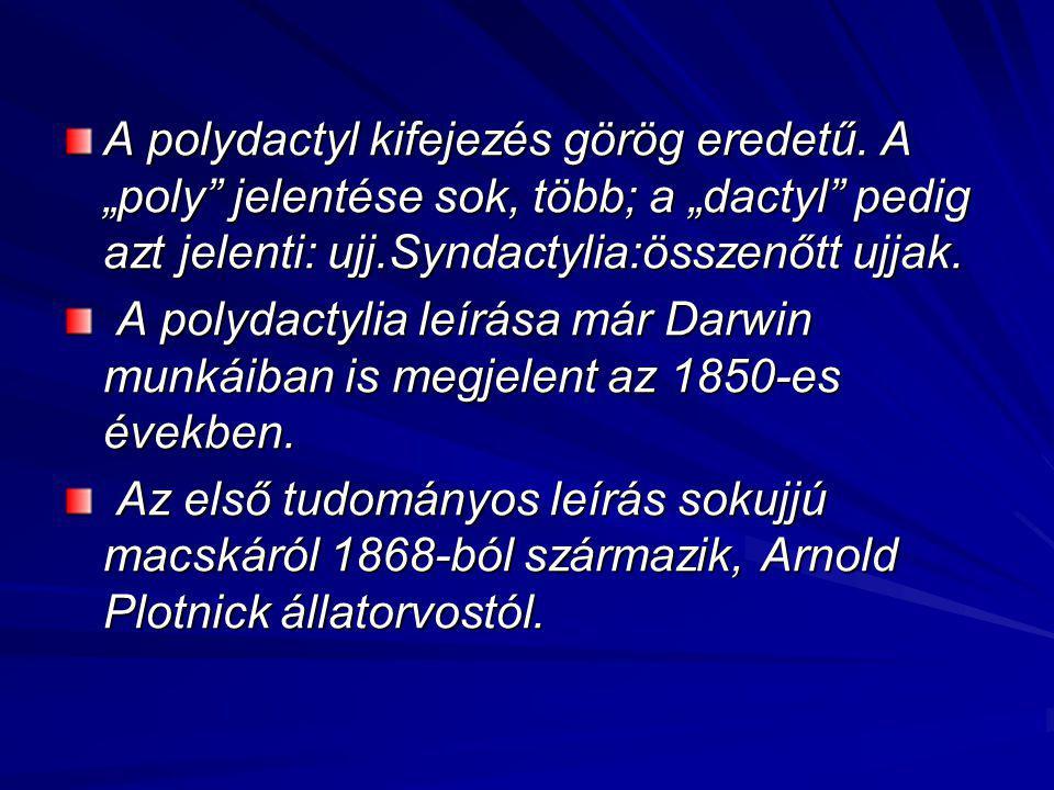 A polydactyl kifejezés görög eredetű