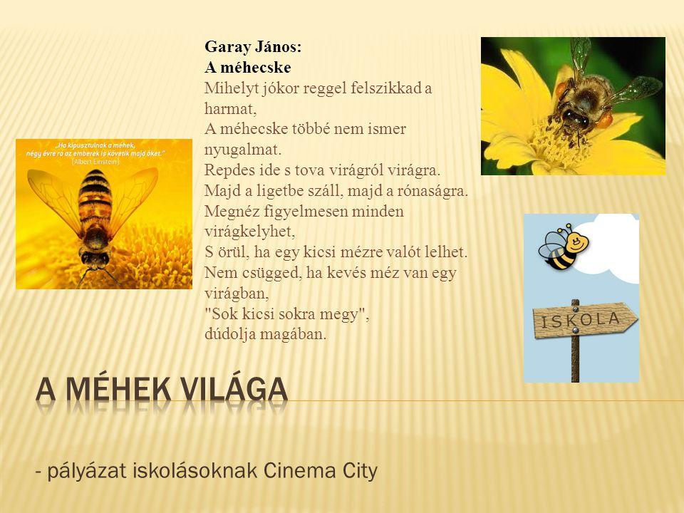 - pályázat iskolásoknak Cinema City