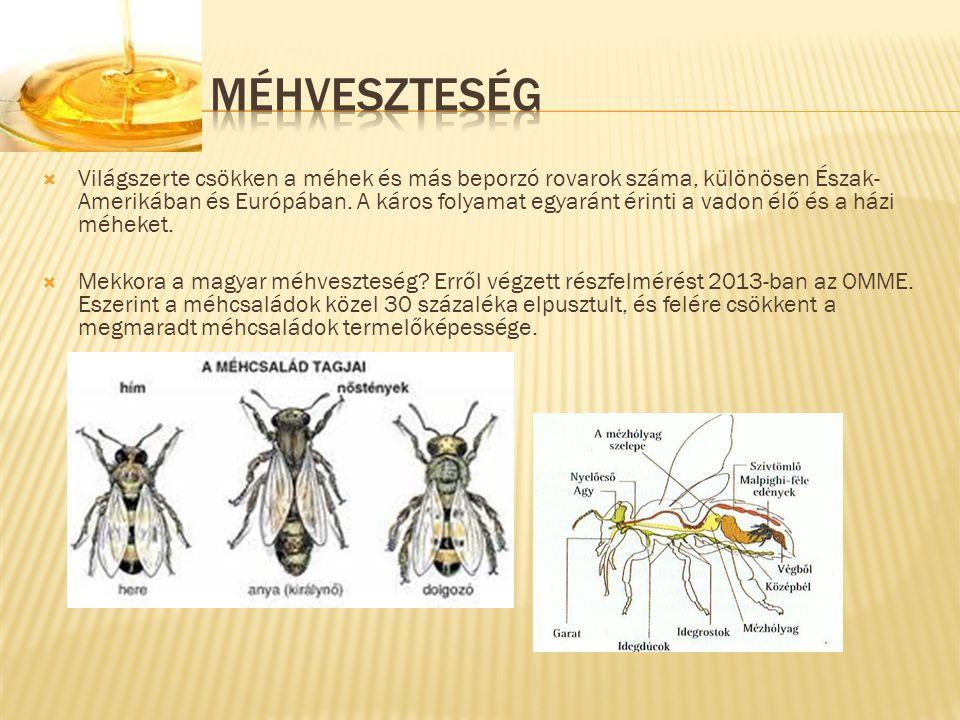 Méhveszteség