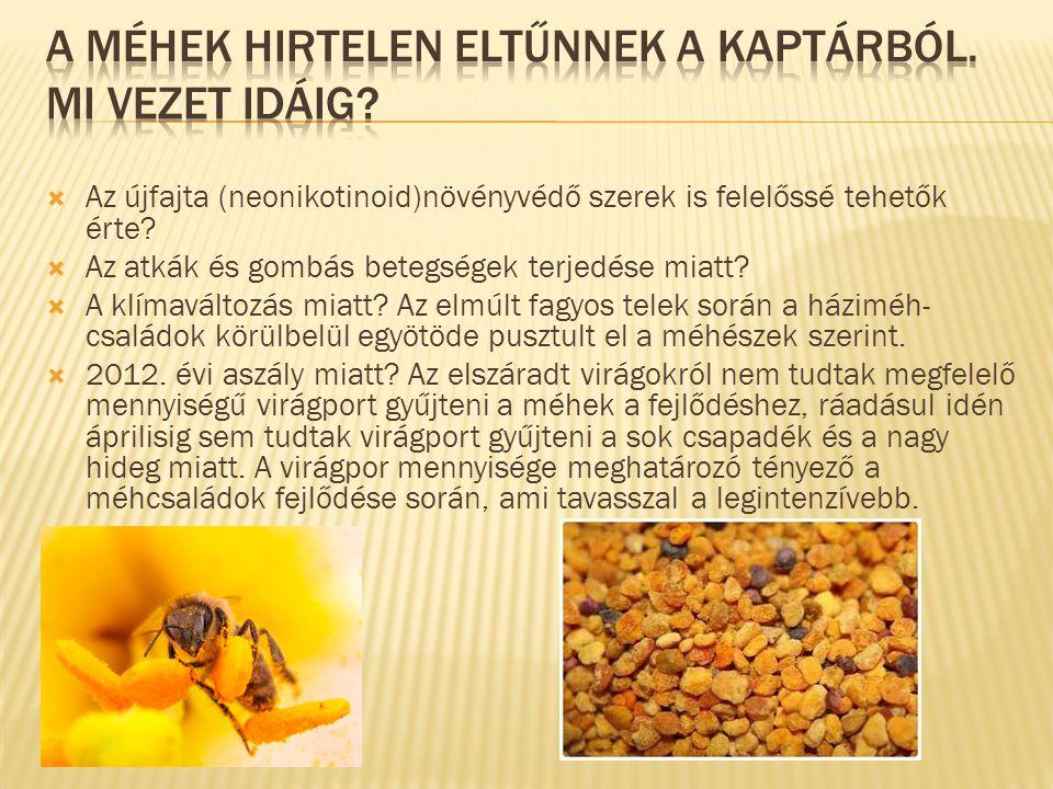 A méhek hirtelen eltűnnek a kaptárból. Mi vezet idáig