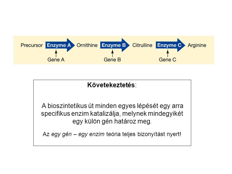 Az egy gén – egy enzim teória teljes bizonyítást nyert!