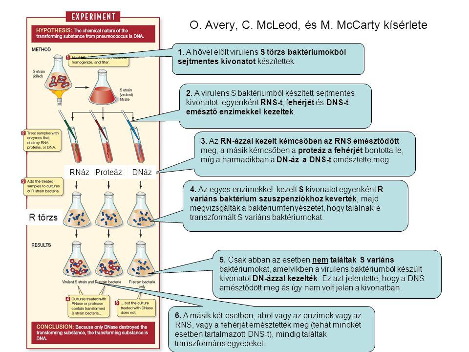 O. Avery, C. McLeod, és M. McCarty kísérlete
