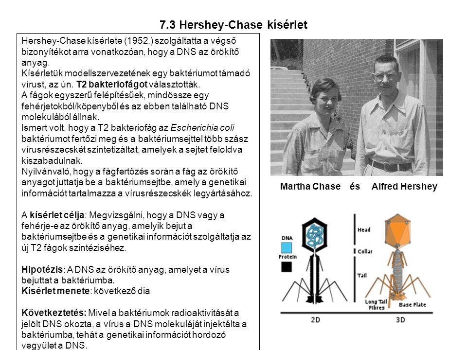 7.3 Hershey-Chase kísérlet
