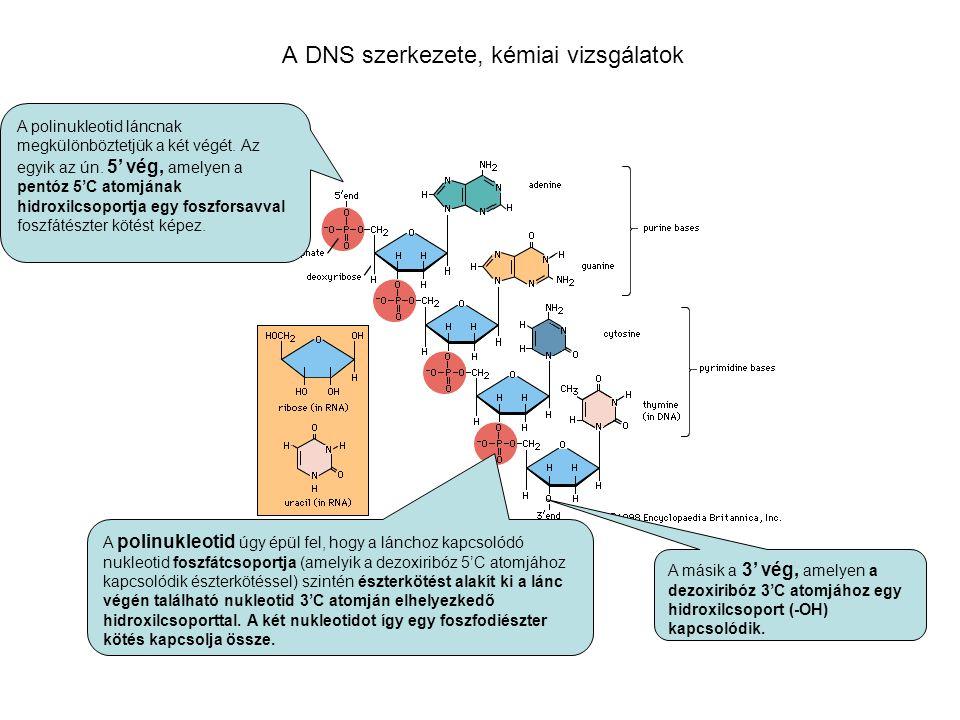 A DNS szerkezete, kémiai vizsgálatok