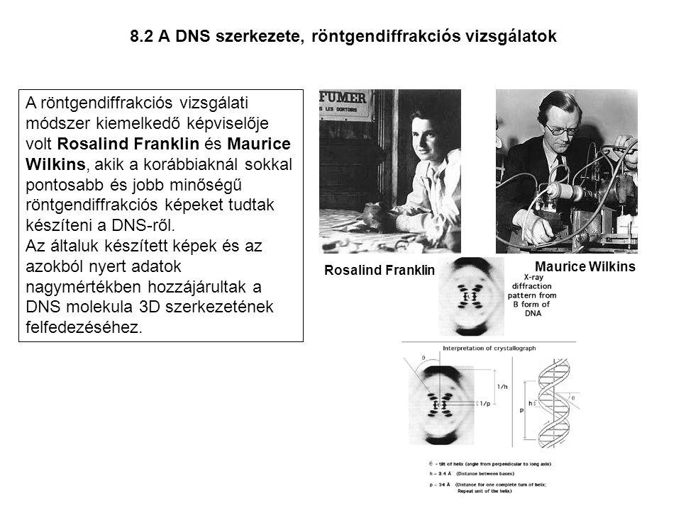 8.2 A DNS szerkezete, röntgendiffrakciós vizsgálatok