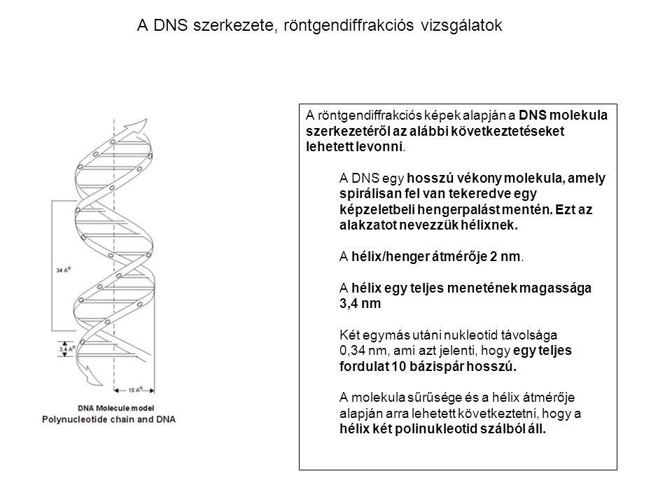 A DNS szerkezete, röntgendiffrakciós vizsgálatok