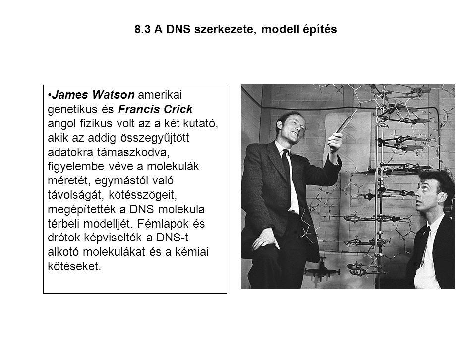 8.3 A DNS szerkezete, modell építés