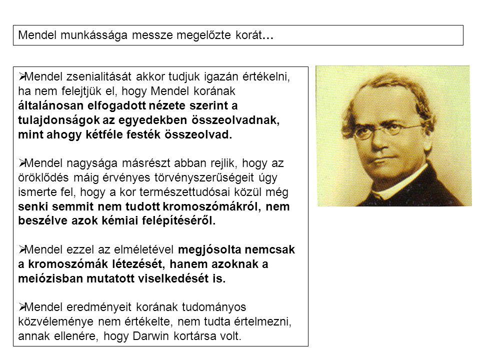 Mendel munkássága messze megelőzte korát…