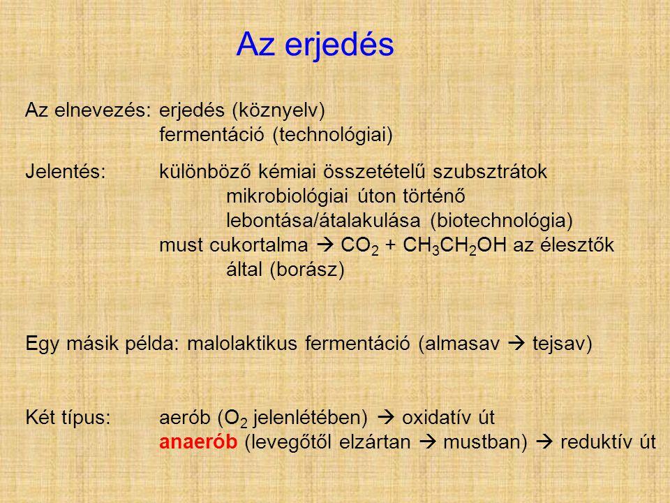 Az erjedés Az elnevezés: erjedés (köznyelv) fermentáció (technológiai)