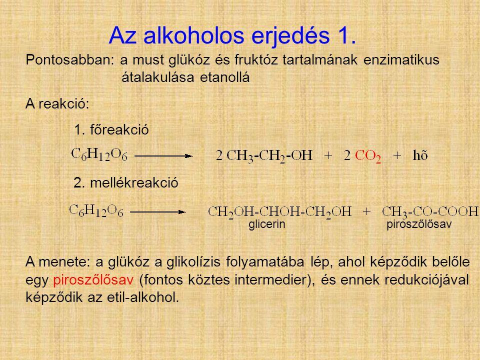 Az alkoholos erjedés 1. Pontosabban: a must glükóz és fruktóz tartalmának enzimatikus átalakulása etanollá.