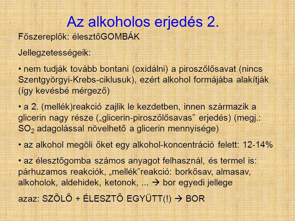 Az alkoholos erjedés 2. Főszereplők: élesztőGOMBÁK Jellegzetességeik: