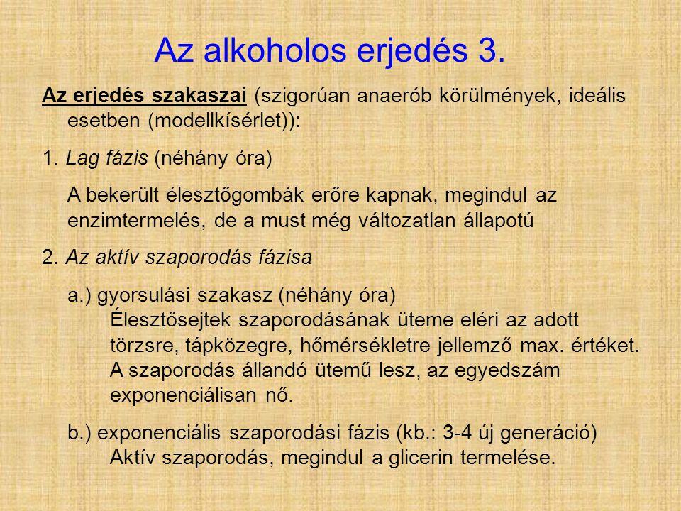 Az alkoholos erjedés 3. Az erjedés szakaszai (szigorúan anaerób körülmények, ideális esetben (modellkísérlet)):