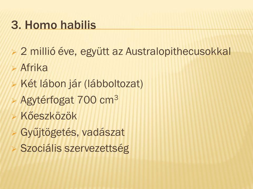 3. Homo habilis 2 millió éve, együtt az Australopithecusokkal Afrika