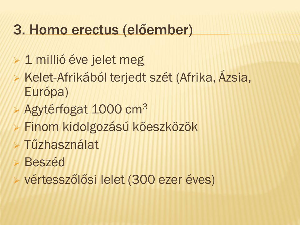 3. Homo erectus (előember)