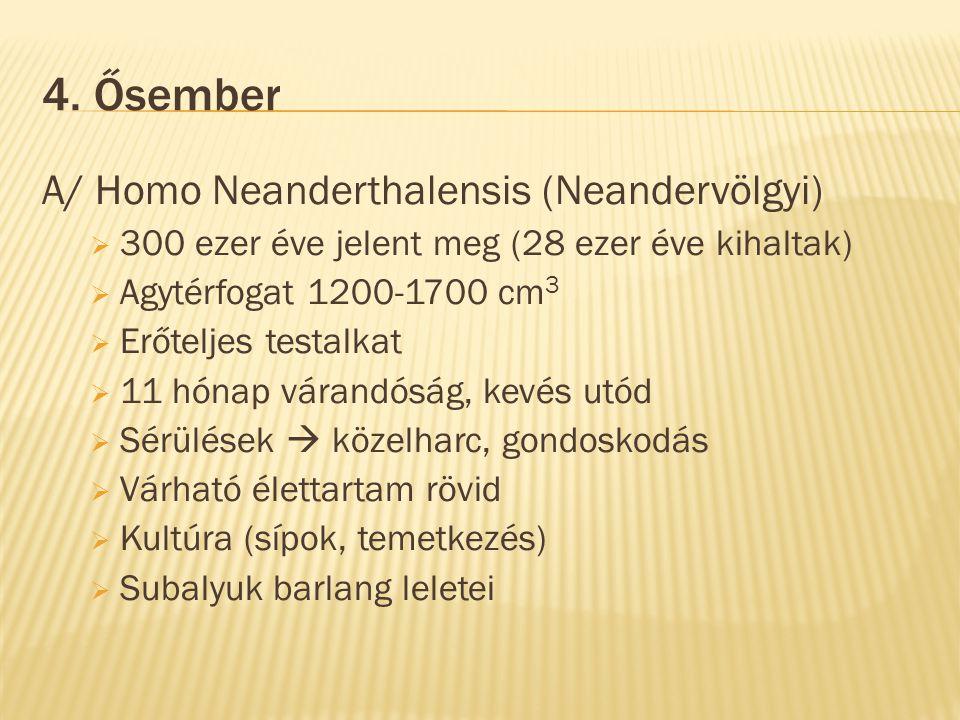 4. Ősember A/ Homo Neanderthalensis (Neandervölgyi)