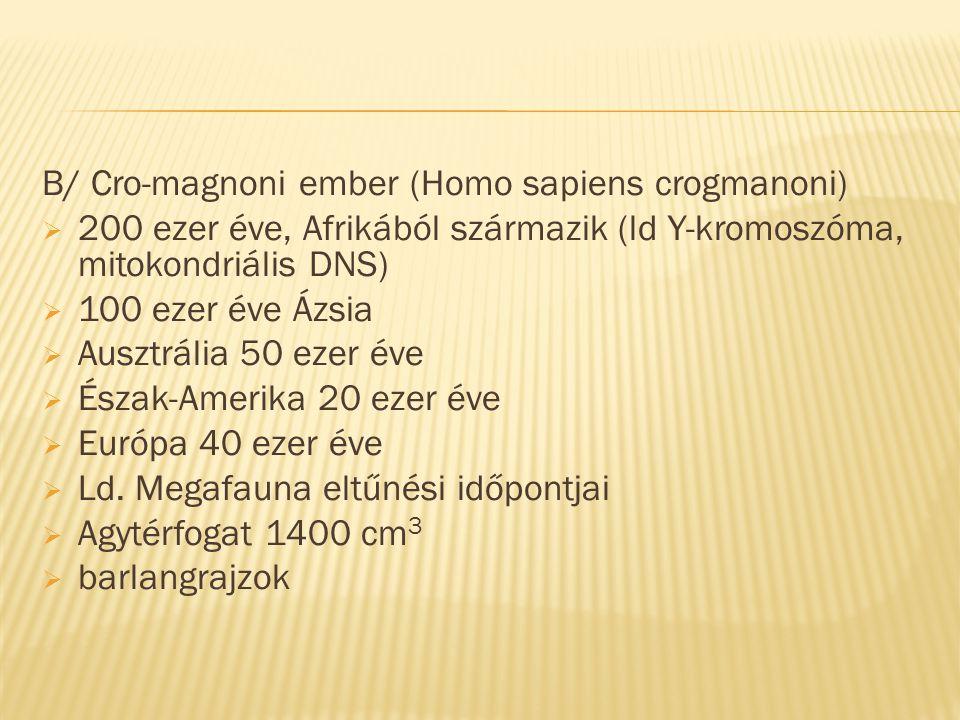 B/ Cro-magnoni ember (Homo sapiens crogmanoni)