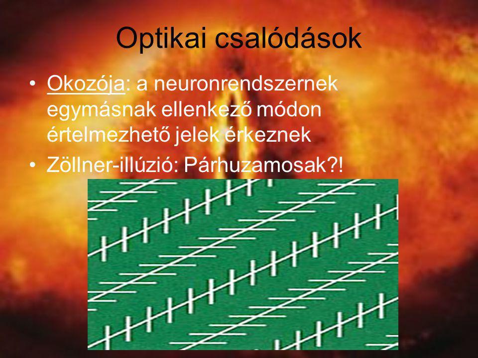 Optikai csalódások Okozója: a neuronrendszernek egymásnak ellenkező módon értelmezhető jelek érkeznek.