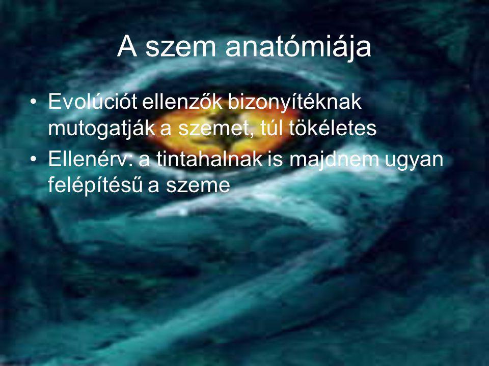 A szem anatómiája Evolúciót ellenzők bizonyítéknak mutogatják a szemet, túl tökéletes.