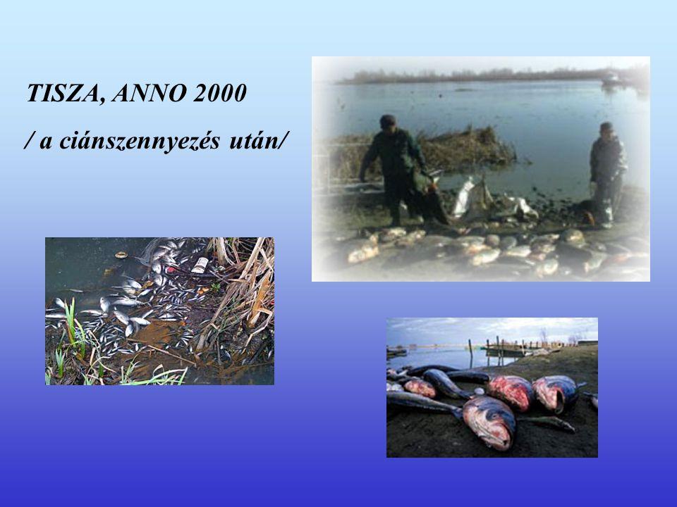 TISZA, ANNO 2000 / a ciánszennyezés után/