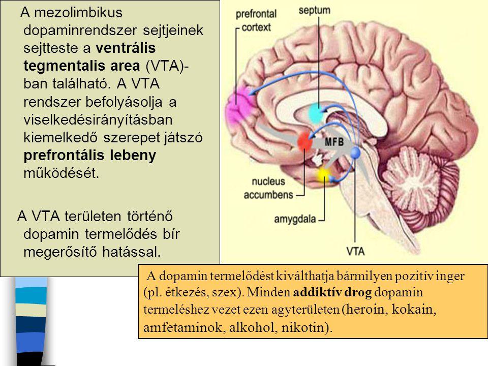 A VTA területen történő dopamin termelődés bír megerősítő hatással.