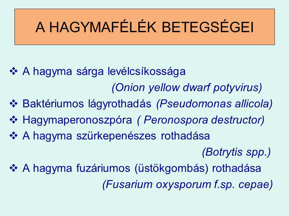 A HAGYMAFÉLÉK BETEGSÉGEI