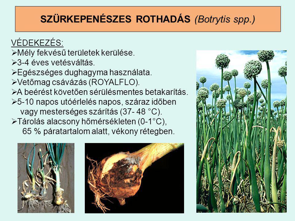 SZÜRKEPENÉSZES ROTHADÁS (Botrytis spp.)