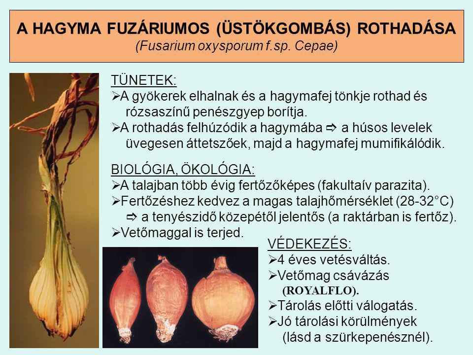 A HAGYMA FUZÁRIUMOS (ÜSTÖKGOMBÁS) ROTHADÁSA (Fusarium oxysporum f. sp