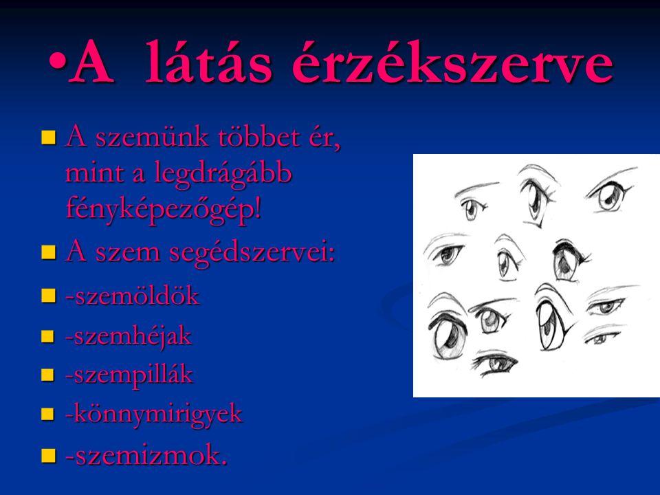 A látás érzékszerve A szemünk többet ér, mint a legdrágább fényképezőgép! A szem segédszervei: -szemöldök.