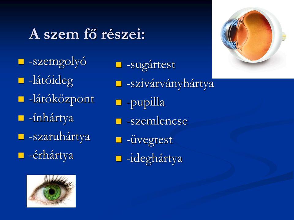 A szem fő részei: -szemgolyó -sugártest -látóideg -szivárványhártya