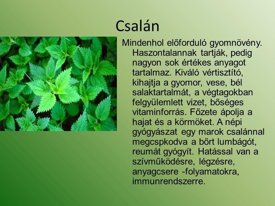 Csalán