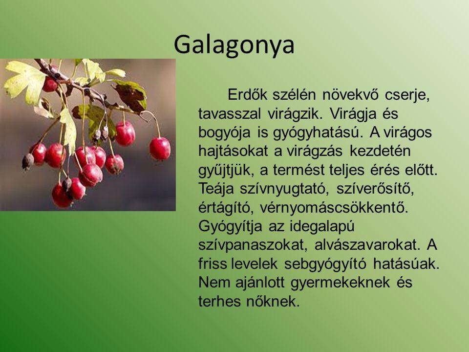 Galagonya