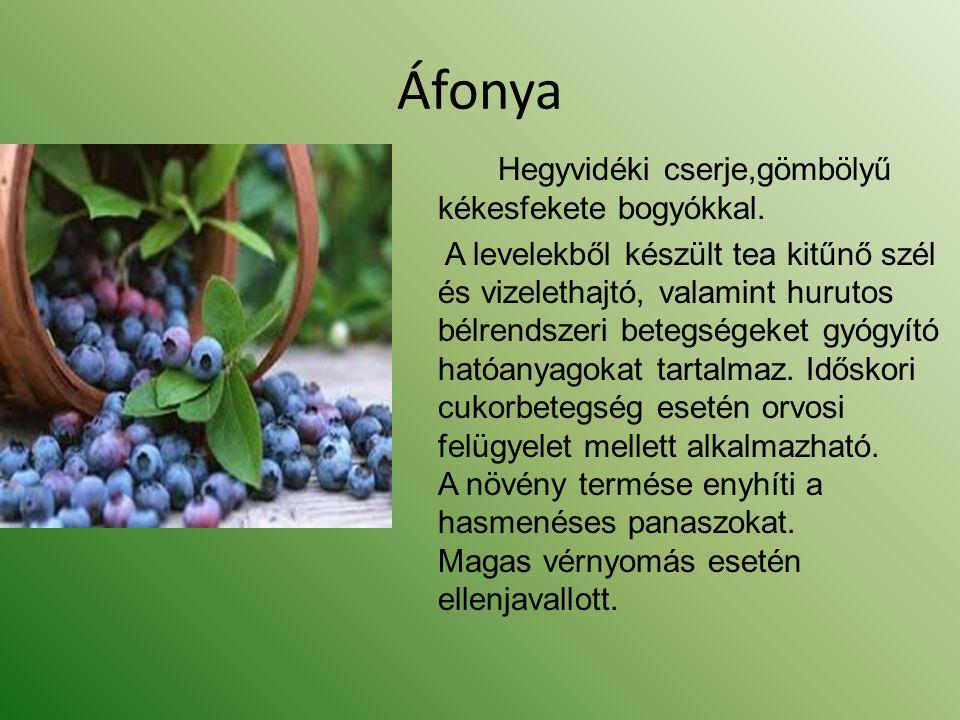 Áfonya Hegyvidéki cserje,gömbölyű kékesfekete bogyókkal.