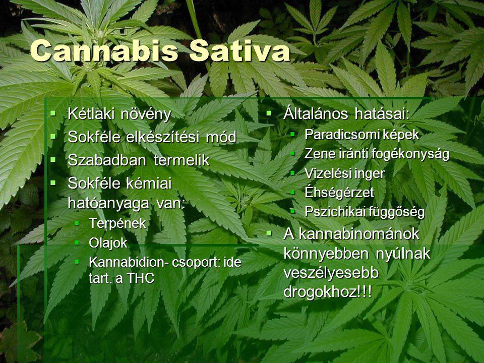 Cannabis Sativa Kétlaki növény Sokféle elkészítési mód