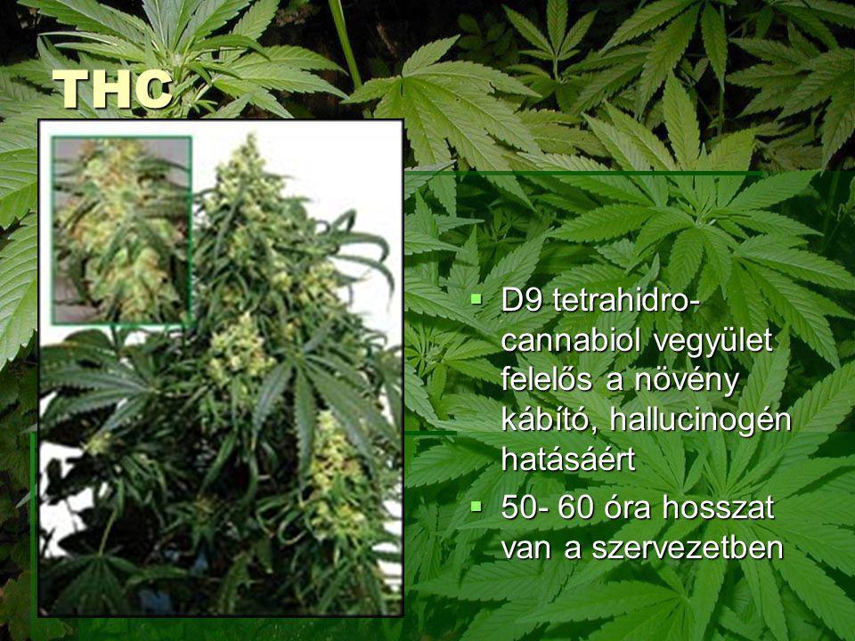THC D9 tetrahidro- cannabiol vegyület felelős a növény kábító, hallucinogén hatásáért.