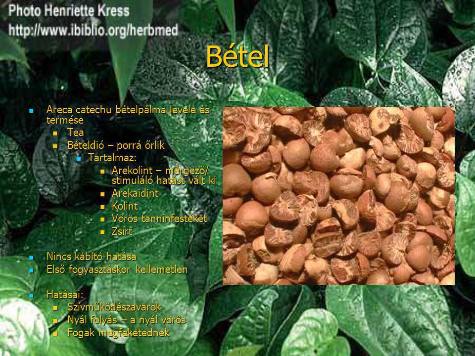 Bétel Areca catechu bételpálma levele és termése Tea
