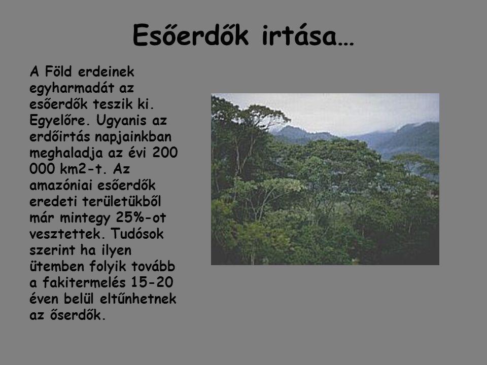 Esőerdők irtása…