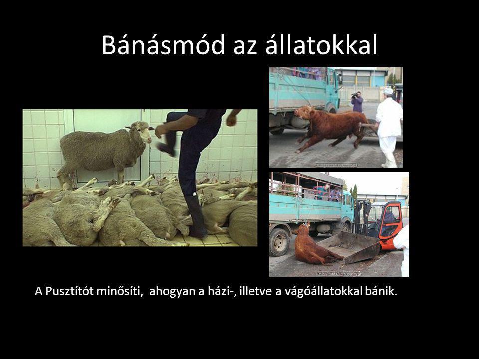 Bánásmód az állatokkal