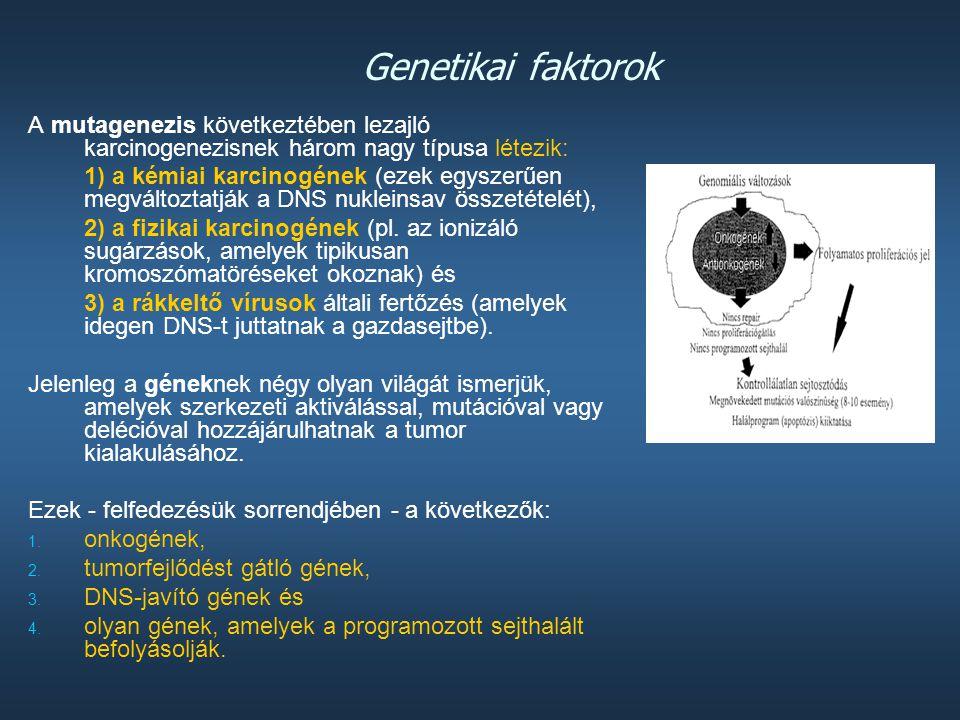 Genetikai faktorok A mutagenezis következtében lezajló karcinogenezisnek három nagy típusa létezik: