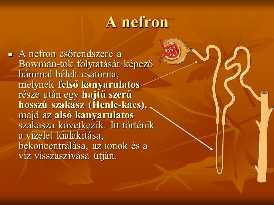 A nefron