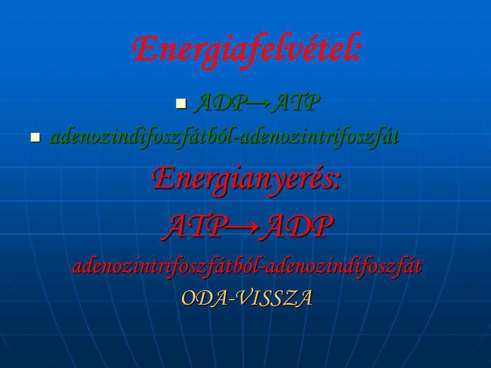 adenozintrifoszfátból-adenozindifoszfát