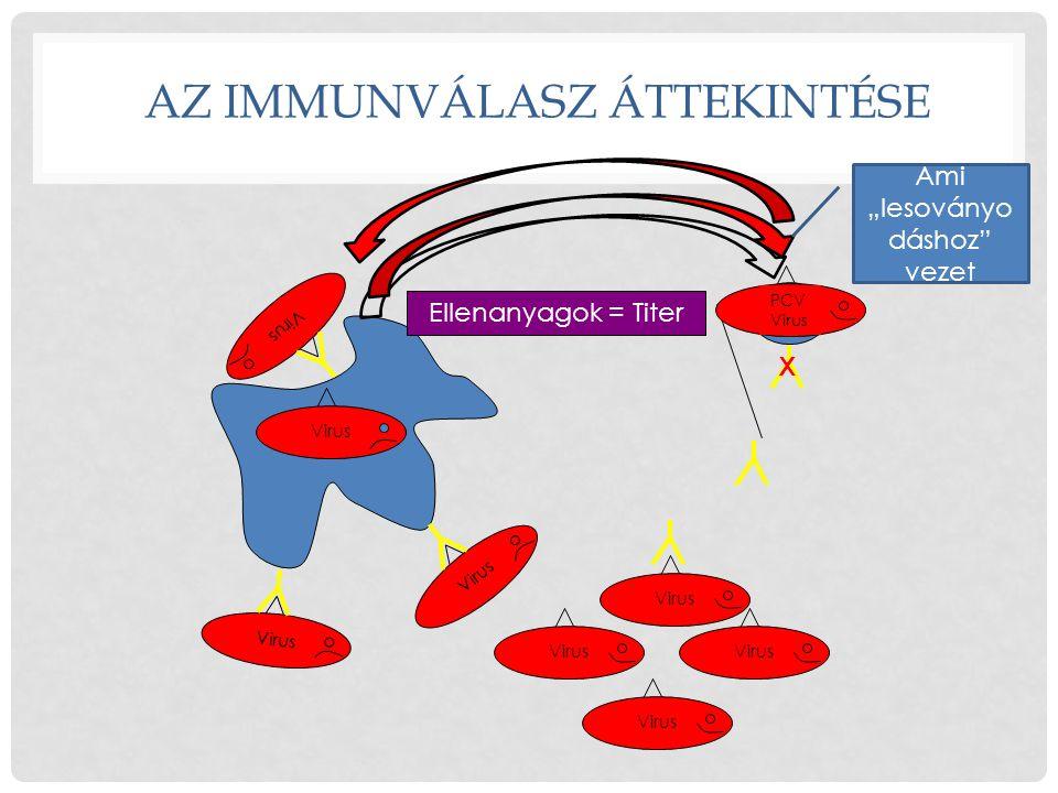 AZ ImmunVÁLASZ ÁTTEKINTÉSE