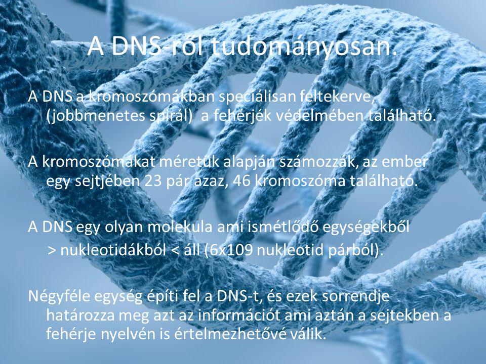 A DNS-ről tudományosan.