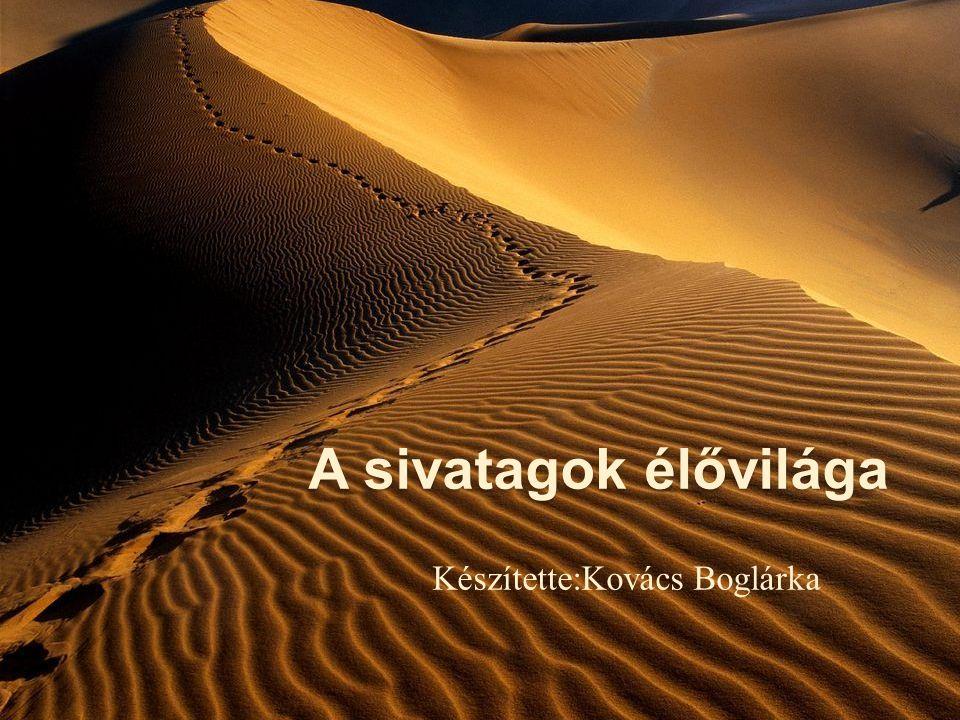Készítette:Kovács Boglárka
