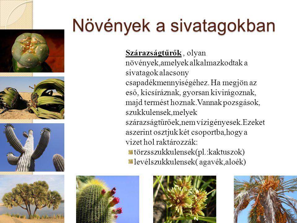 Növények a sivatagokban