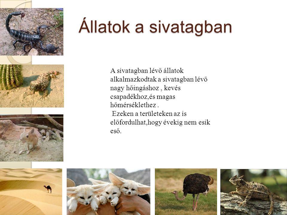 Állatok a sivatagban A sivatagban lévő állatok alkalmazkodtak a sivatagban lévő nagy hőingáshoz , kevés csapadékhoz,és magas hőmérséklethez .