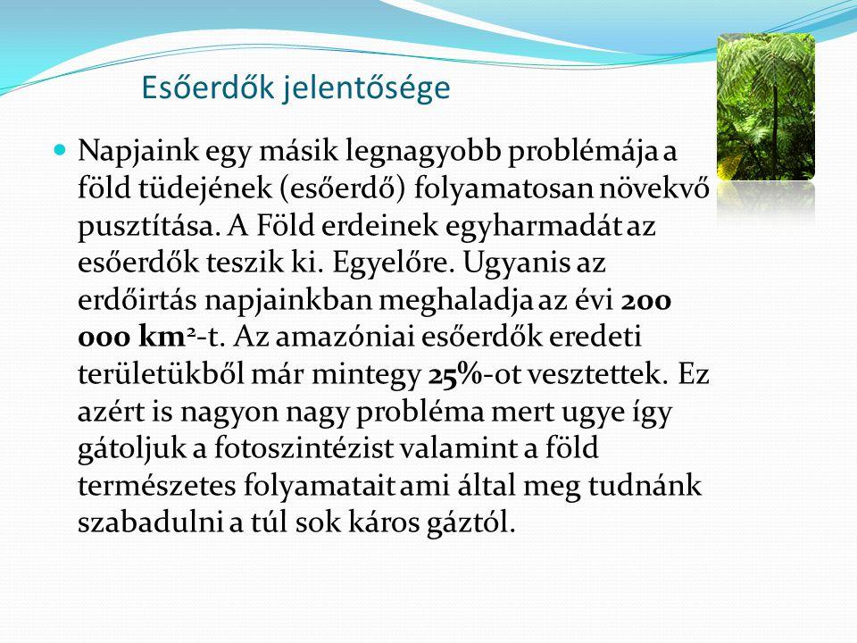 Esőerdők jelentősége